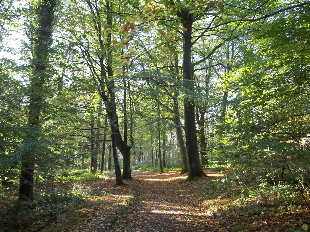 Places to stay in somerset - woods nearby